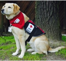 Member of the American Red Cross Canine Action Team