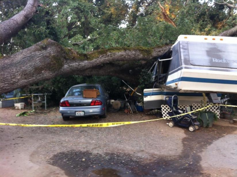 Tree Demolishes RocklinHome